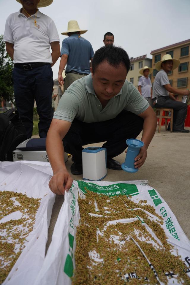 早粳稻新品种